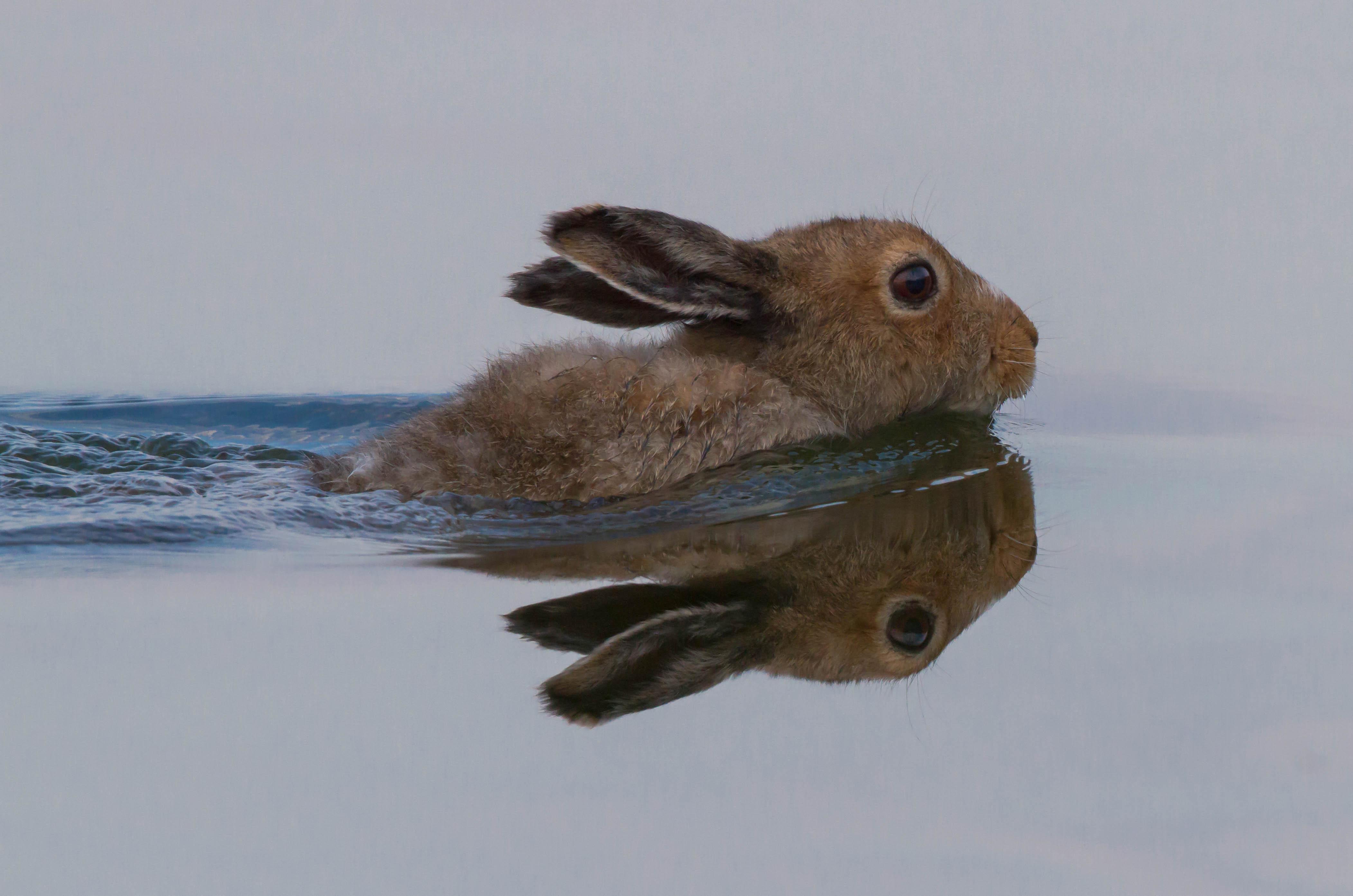 Kalle Haapala on onnistunut vangitsemaan kamerallaan mm. merikotkan, ruostepyrstön ja jopa uivan jäniksen.
